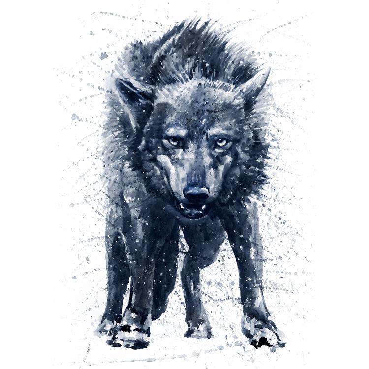 Midnight Blue Wolf