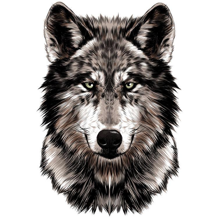 Dark Brown Wolf
