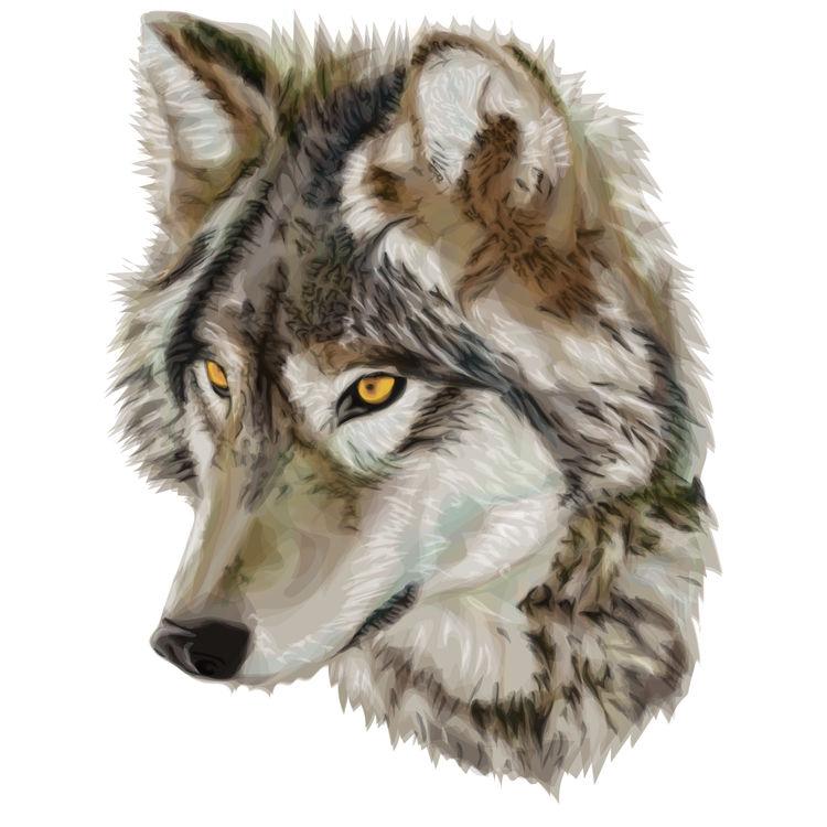 Golden Hazel Wolf