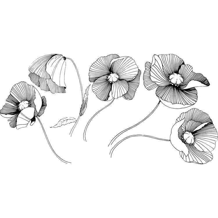 Black and White Poppies
