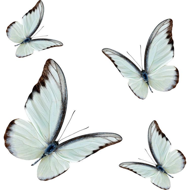 Gray Blue Butterflies
