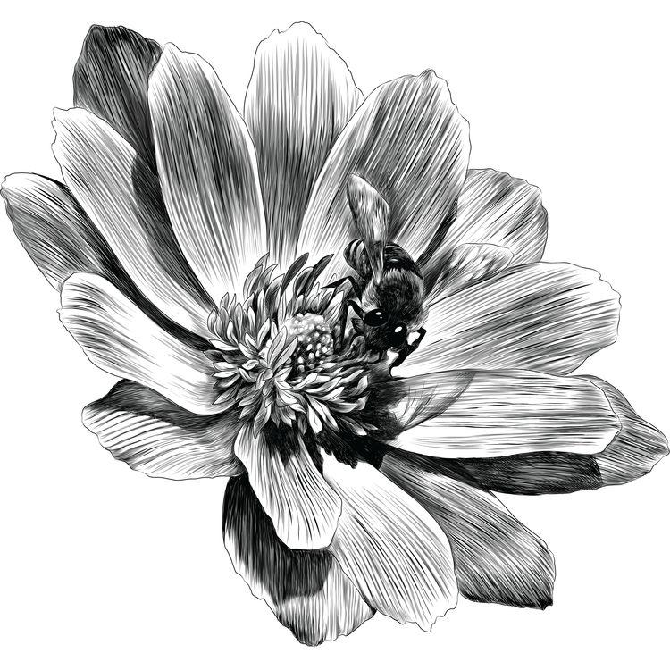 Adonis Flower