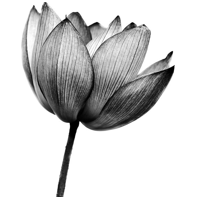 Black Floral Beauty