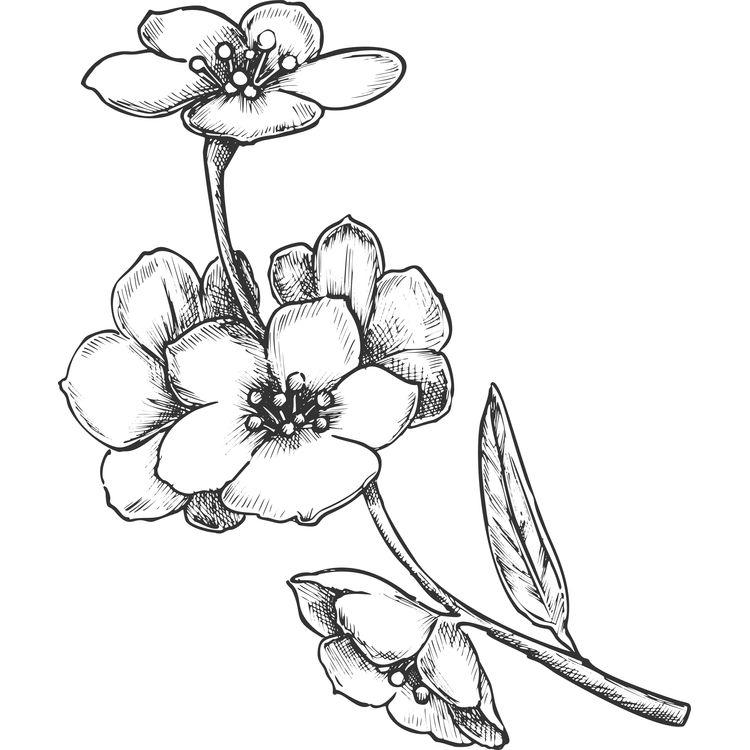 Meri, the Cherry Blossom