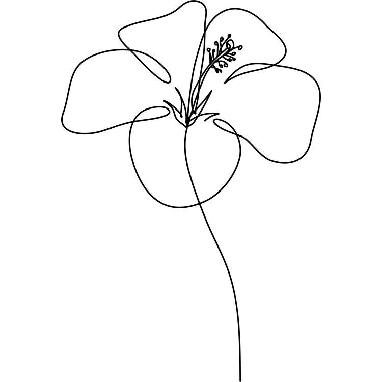 Hibiscus Rose Flower