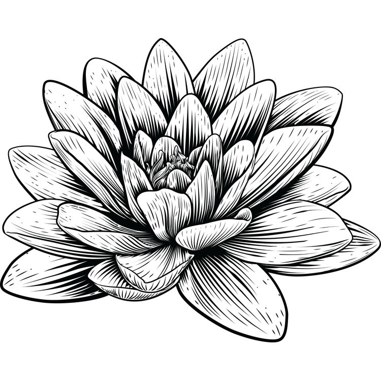Black Ink Lotus