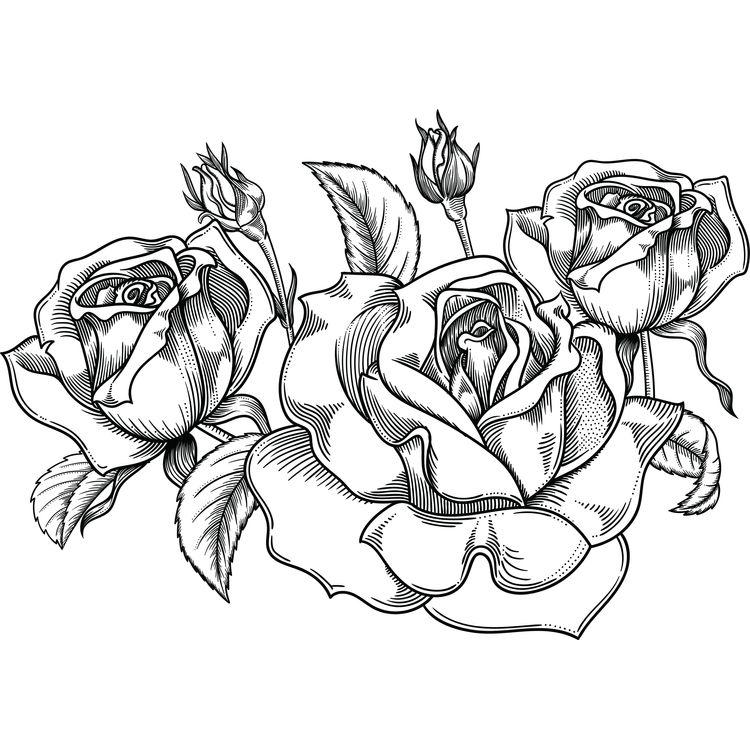 Rose, Rose, and Rose