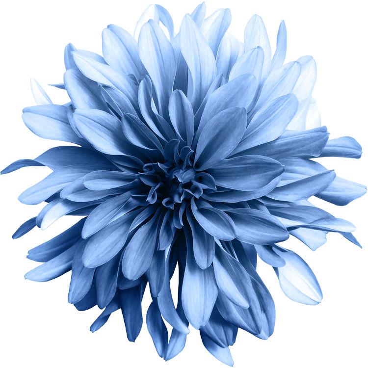 Shaggy Blue Flower