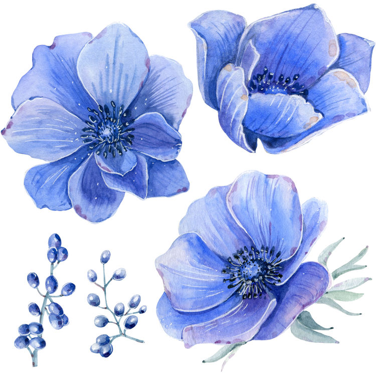 Blue and Purple Blossoms