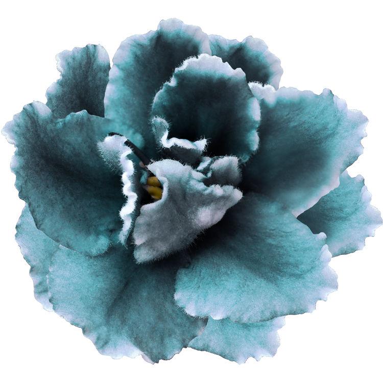 Blue Love Blossom