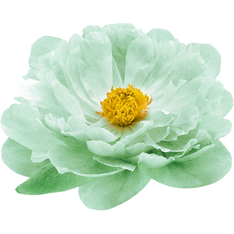 Watercolor Candy Green Peony