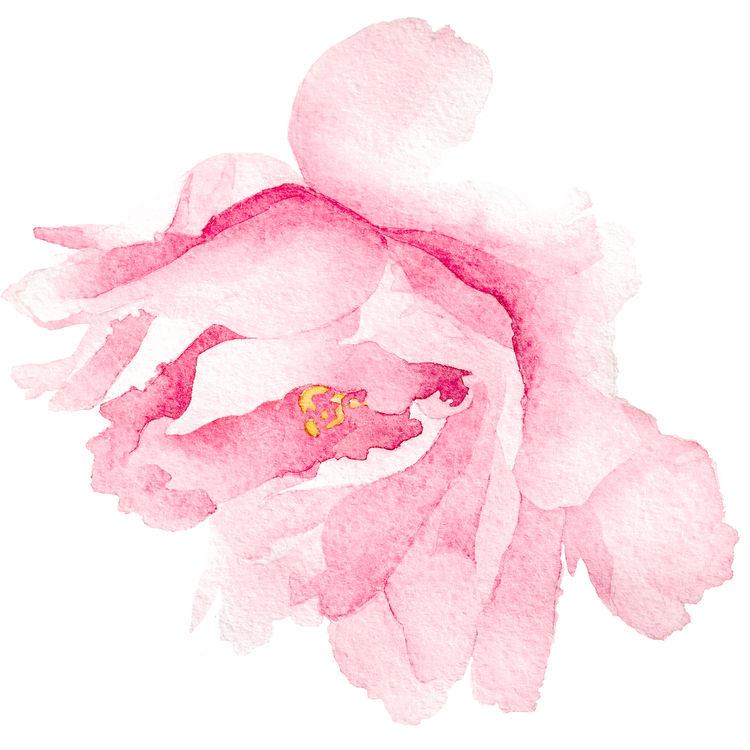 Watercolor Blush Pink Flower