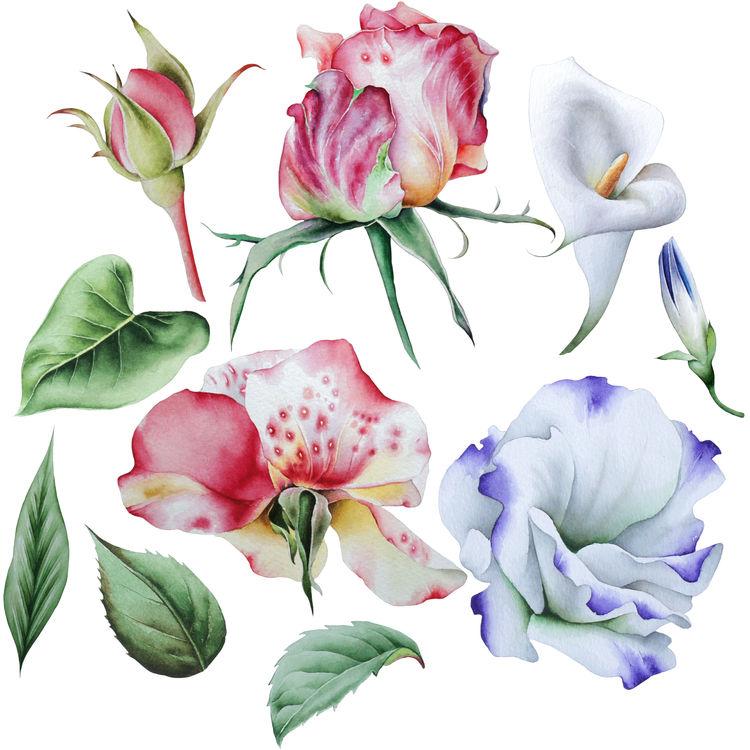Hawaiian Blooms
