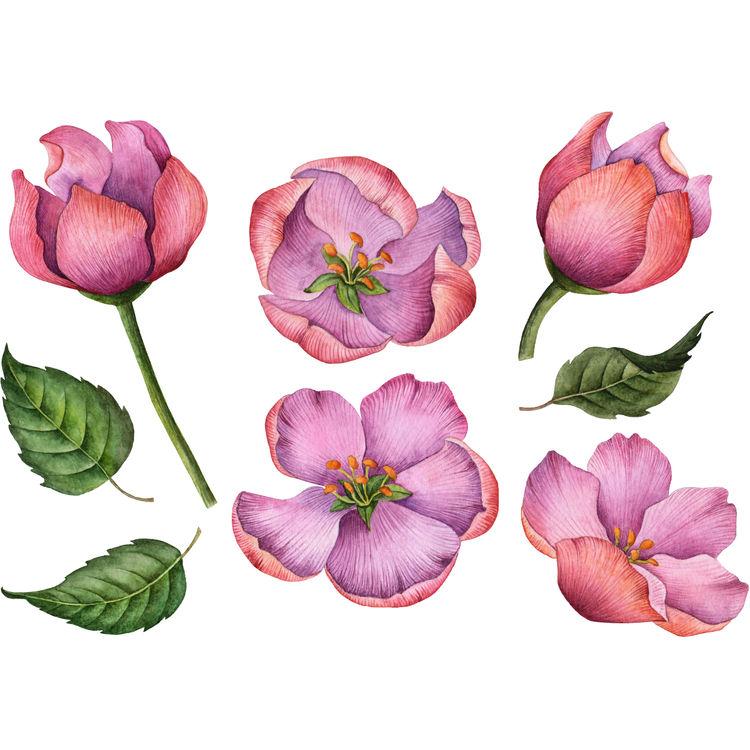 Pink Violet Blooms