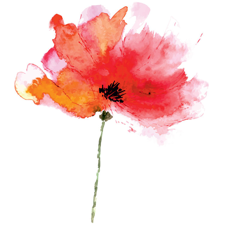 Red Watercolor Poppy