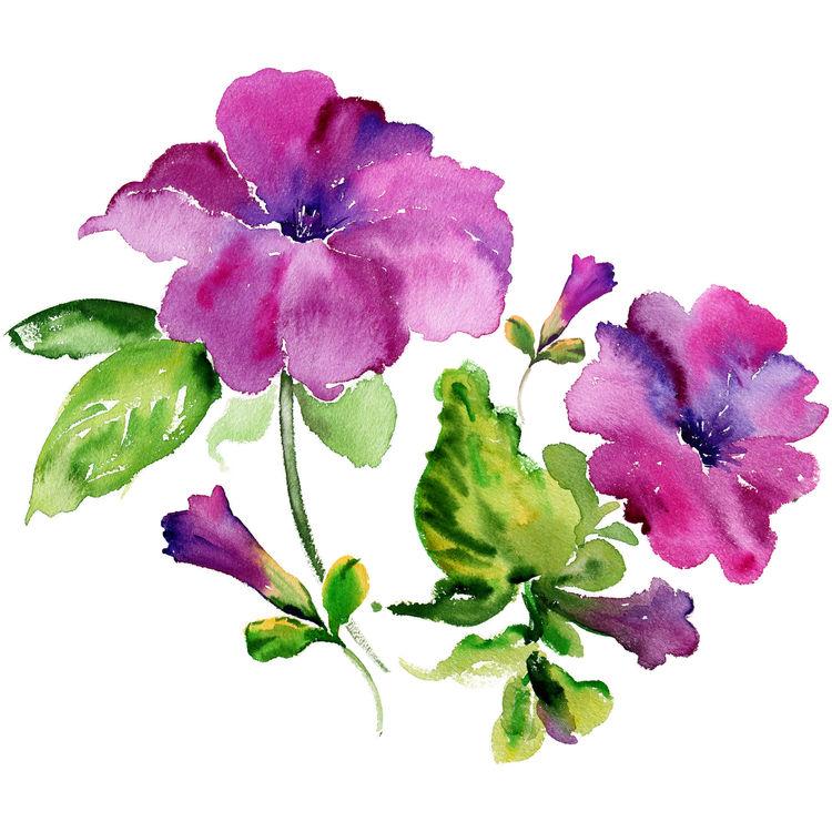 Magenta Watercolor Florals