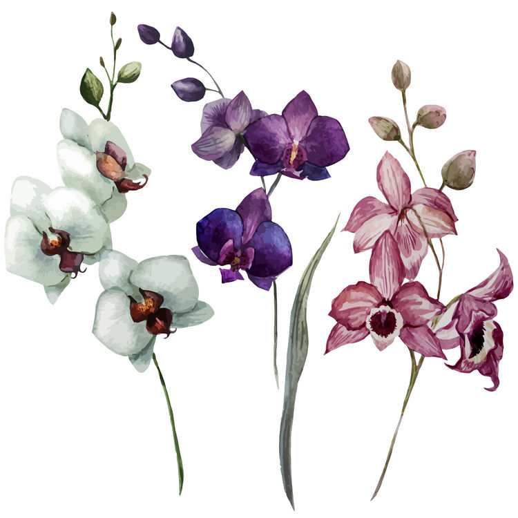 Purple Floral Individuals