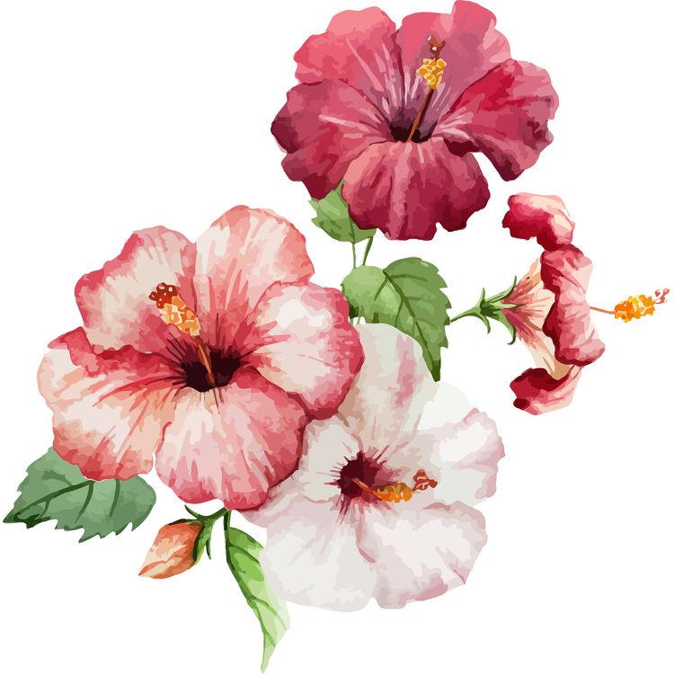 Pink Hibiscuses