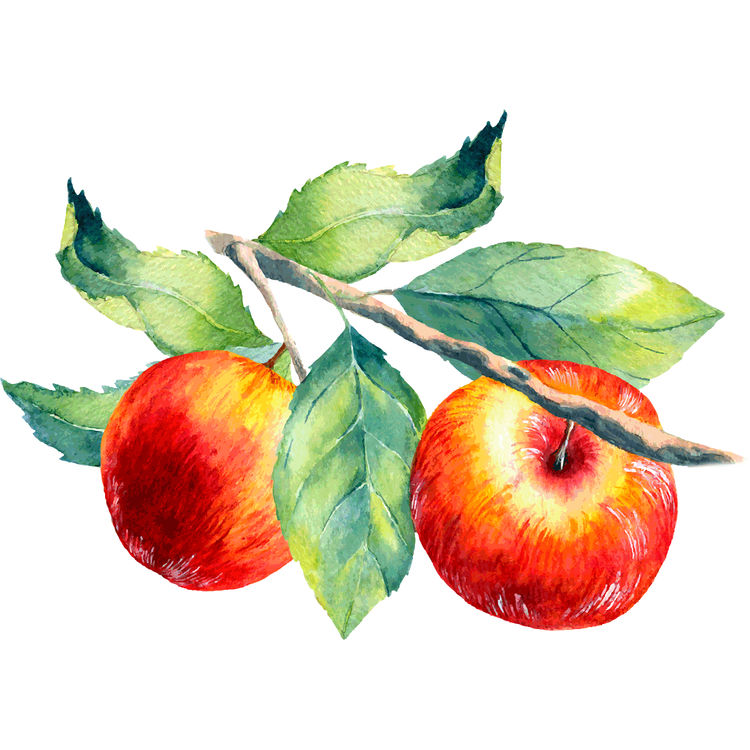 Summer Red Apples