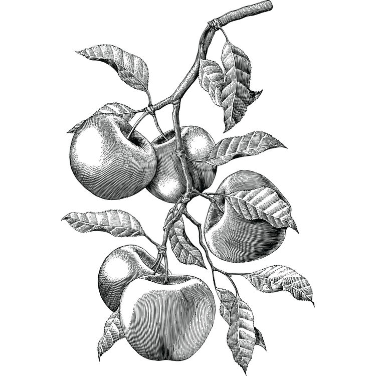 Sketched Apples