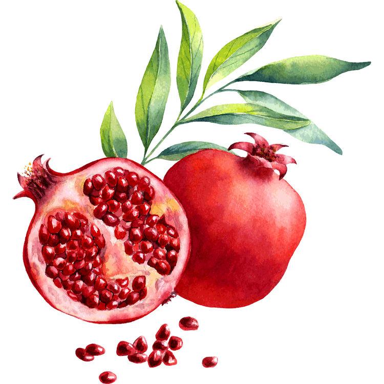 Watercolor Pomegranite