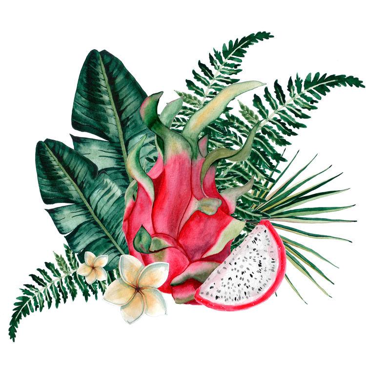 Tropical Dragon Fruit
