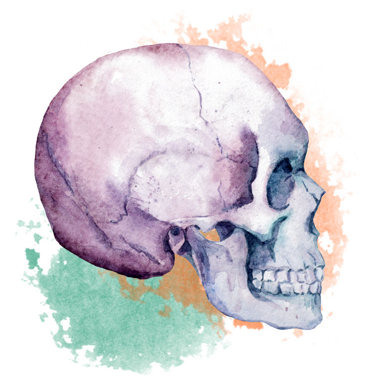 Watercolor Lucy, the Skull