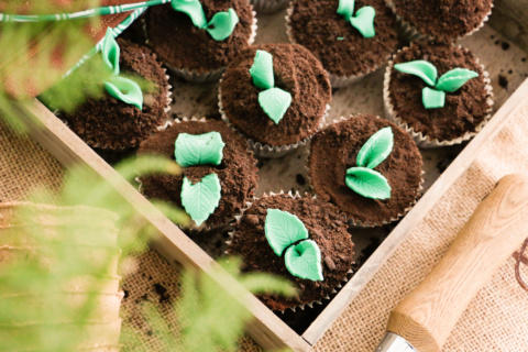Cupcakes with fondant shoots in Oreo soil