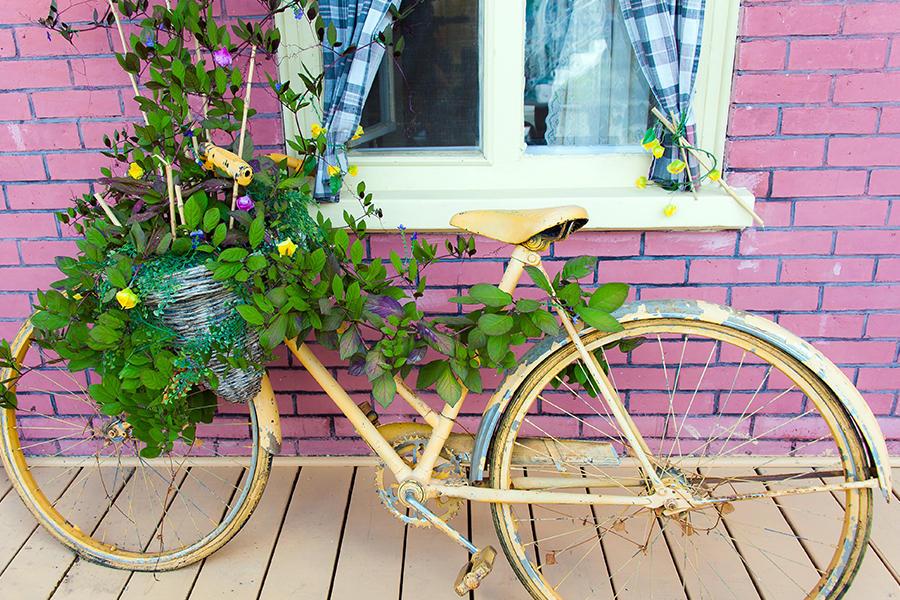 Old bike pot planter