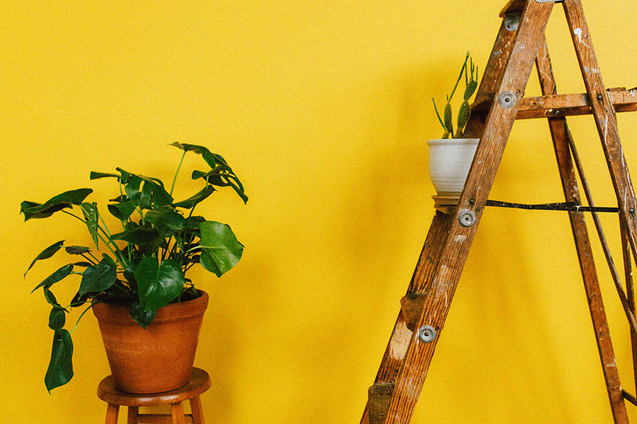 Yellow wall with step ladder and potted plant