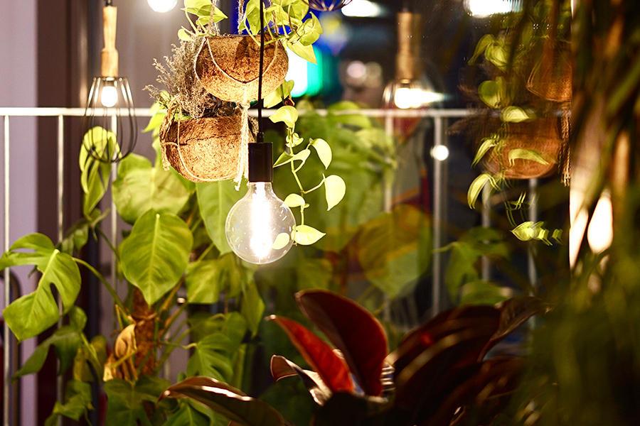 Plants and hanging light bulbs