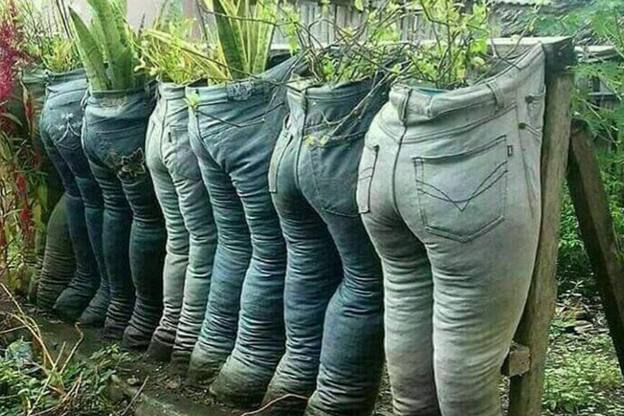 Creative ideas for potting plants