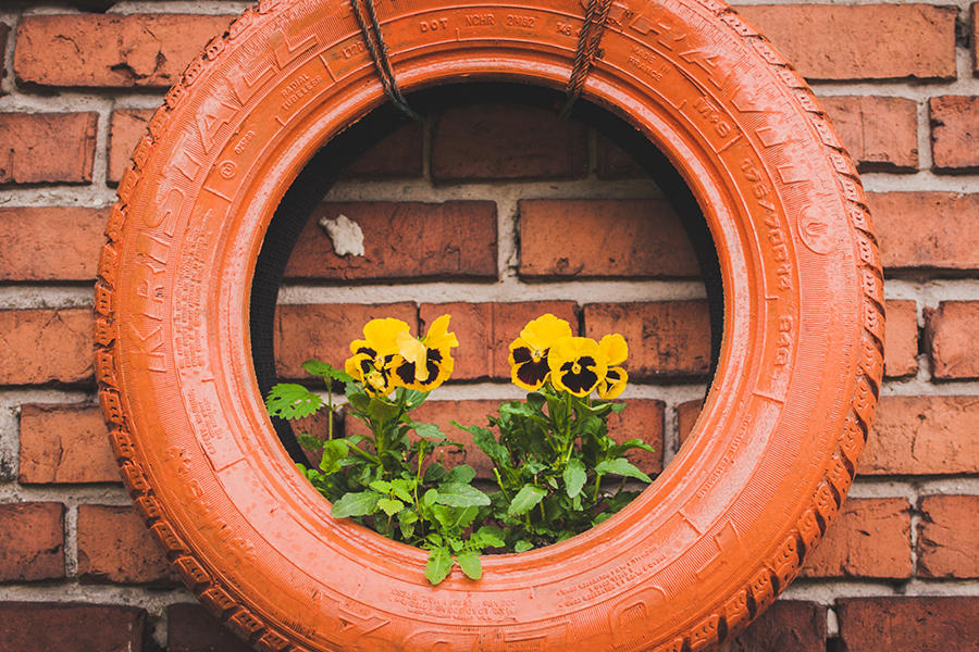 Old car tire used as planter