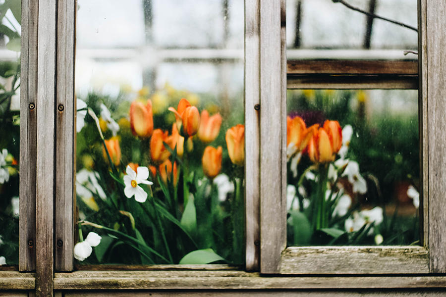 View through greenhouse window