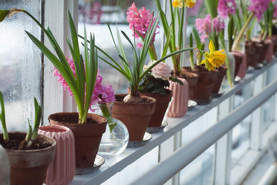 Shelf of potted plants inside a greenhouse