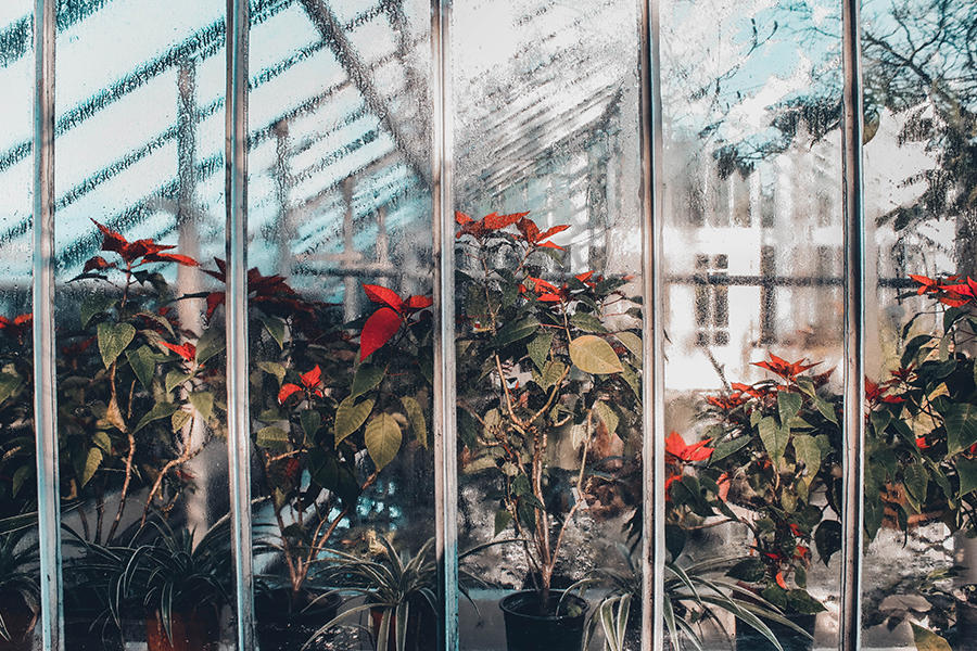 Greenhouse windows with plants inside
