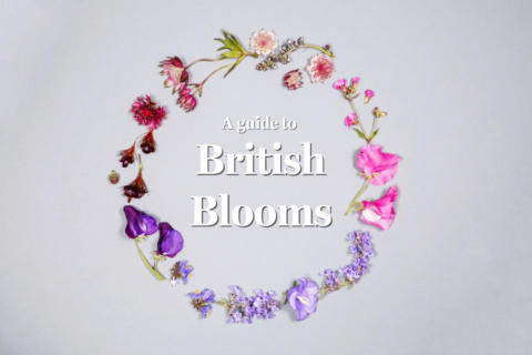 Flay lay of British blooms in a circle, on a light blue background. Words in the centre read 'A guide to: British Blooms'