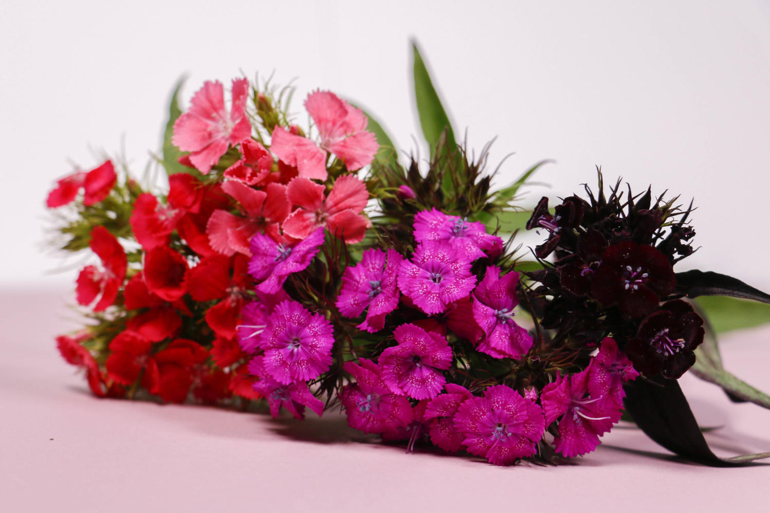 British flowers, grown on a British flower farm. The 2019 guide to cut flowers in your home. Malvern Garden Buildings. Showsites in Staffordshire, Shepperton, Wiltshire, Oxfordshire and Buckinghamshire