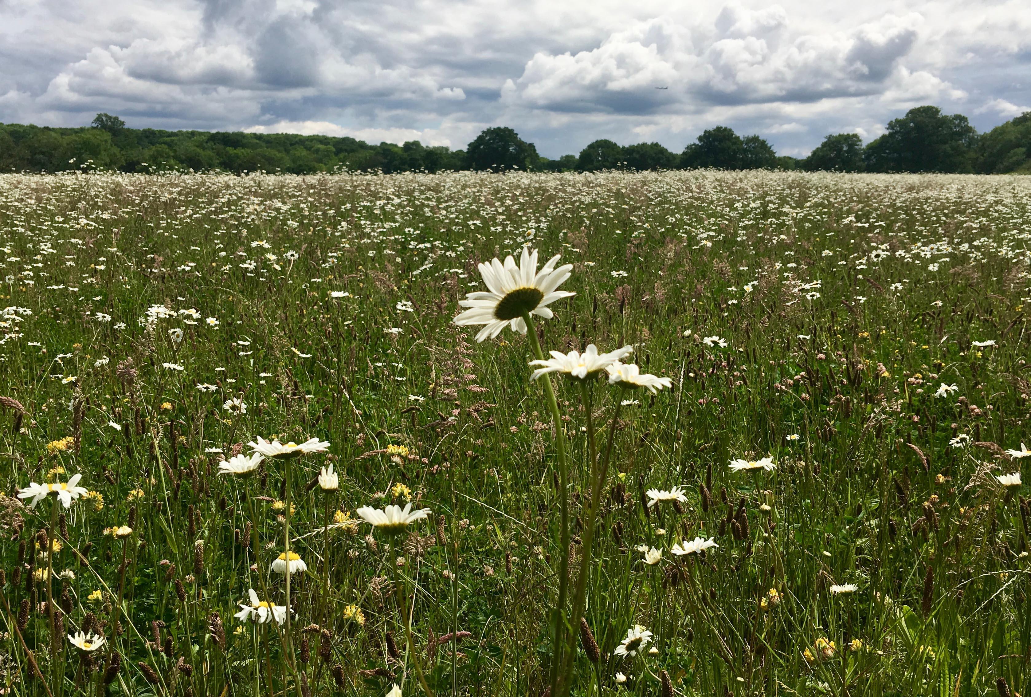 Chertsy Meadow, Shepperton, Greater London. Staycation Inspiration by Malvern Garden Buildings