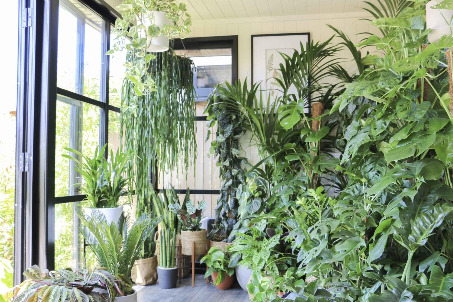 Malvern Garden Buildings have joined forces with Ian Drummond, Indoor Garden Design's Creative Director and plant stylist to the stars, to create a plant-filled 'wobble room' for Virtual RHS Chelsea Flower Show 2020.
