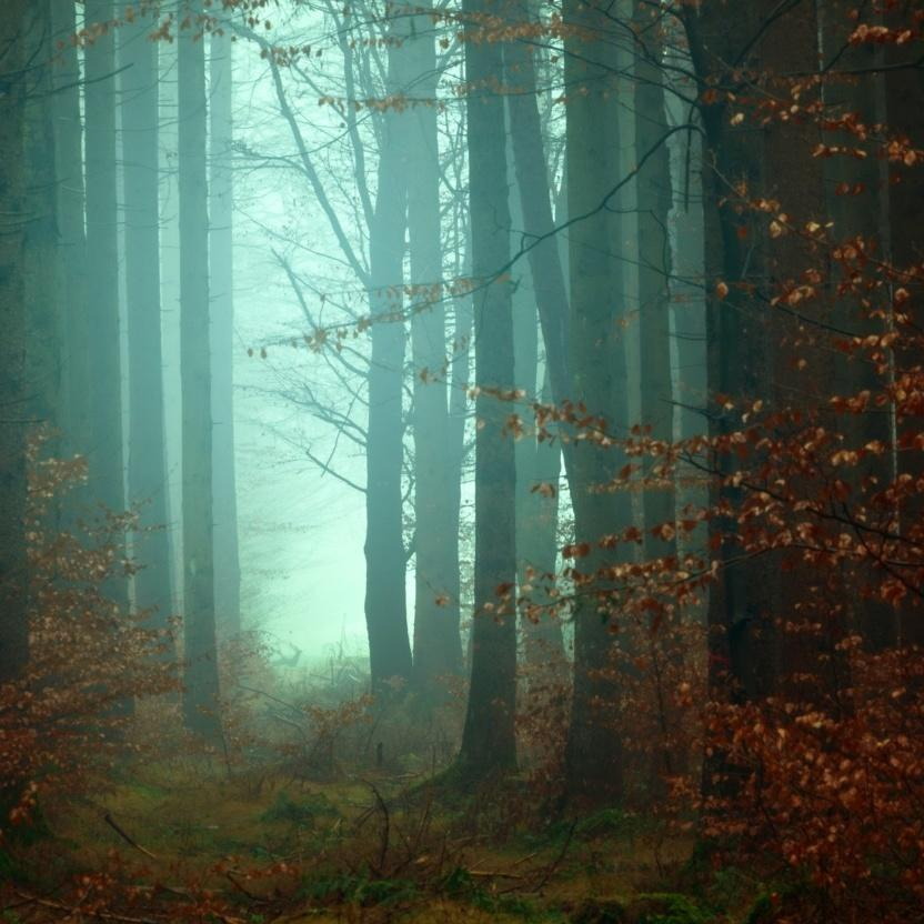 Cottagecore lifestyle - woods
