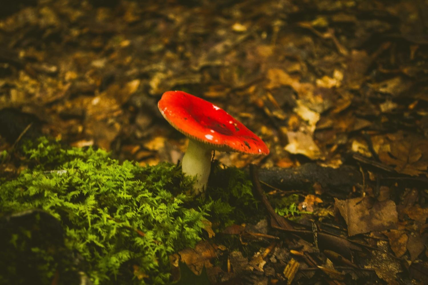 Fairytale toadstool in forest