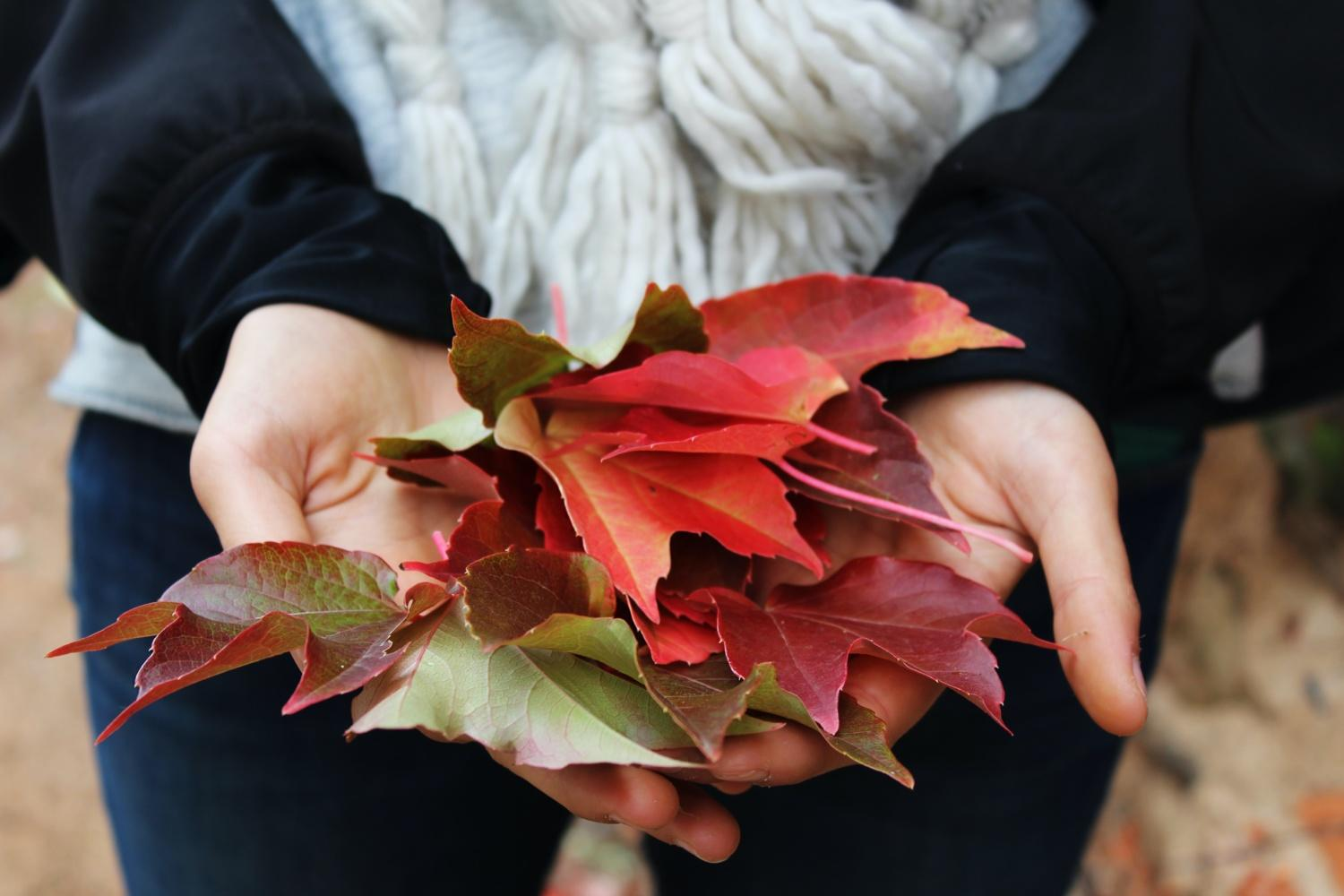 Close up on hands holding different coloured autumn leaves
