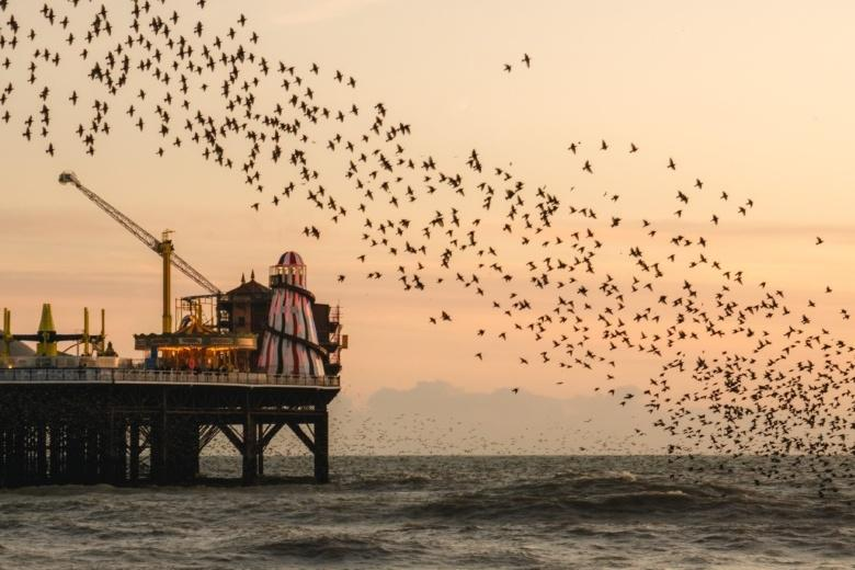 A murmuration of starlings over sea shore with end of pier in view