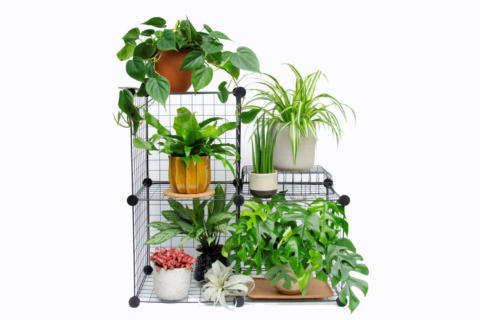 Collection of houseplants on wire shelving
