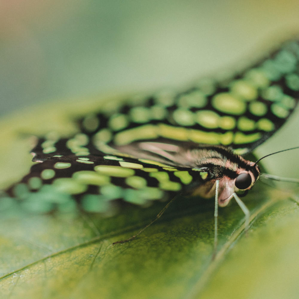 How to Start Shooting Macro Photography: A Beginners Manual