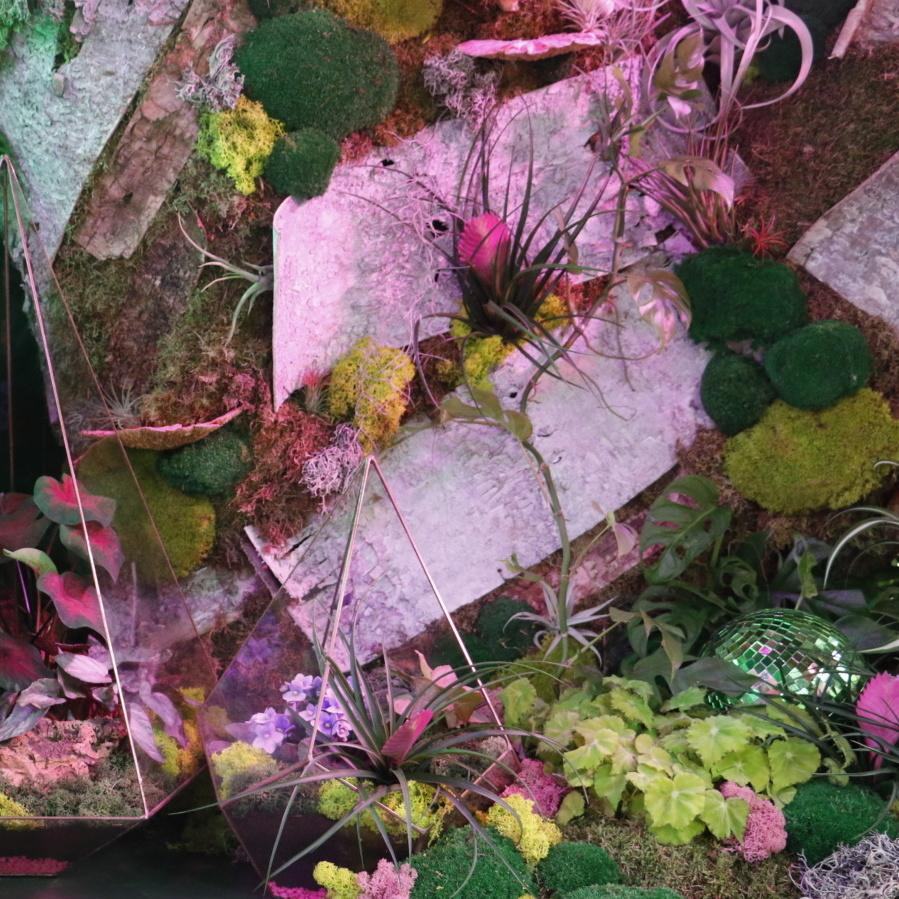 Terrariums top dressed with different coloured mosses