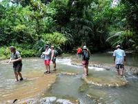 Het regenwoud komt hier tot op het strand. © Heritage Expeditions