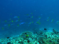 Een blik onder water toont een wondere wereld die we anders gewoon zouden voorbij varen. © Heritage Expeditions
