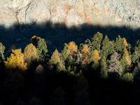 Een warm spel van licht en schaduw op de herfstkleuren van de bomen.  © Sebastian Vervenne